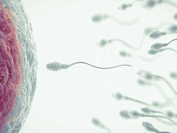 sperm retrieval
